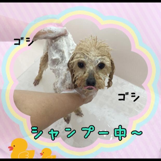 pic20180816163257_2.jpg