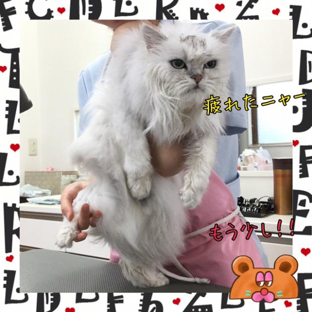 pic20191202110903_2.jpg
