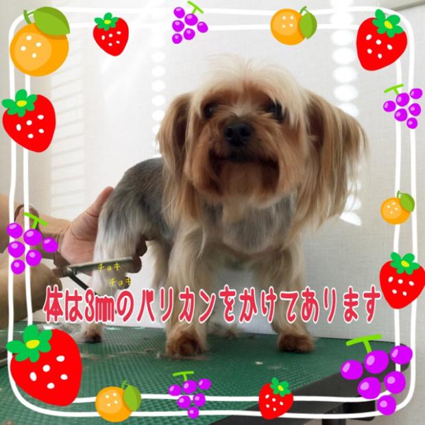 pic20191214124950_2.jpg
